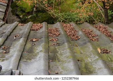 Fallen fallen on the roof
