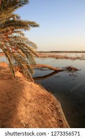 Fallen palm tree on Fatnas Island during a beautiful sunset over the fresh water lake of the Siwa Oasis in the Egyptian Sahara desert