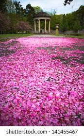 Fallen pink cherry blossoms cover path to garden gazebo