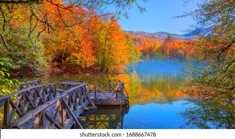 Fallen red and yellow leaves in autumn forest - Autumn landscape in (seven lakes) Yedigoller Park Bolu with wooden pier - Bolu, Turkey