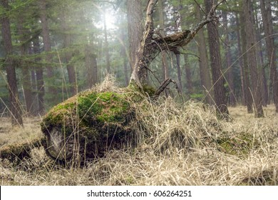 A fallen rotting tree in a forest covered with green moss and sunlight shining through the trees
