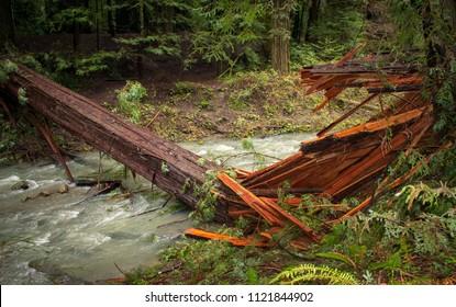Fallen sequoia tree in the Sequoia National Park in California