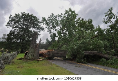 Fallen Tree after being hit by Lightning during a Hurricane