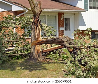 Fallen tree after a severe storm in a residential neighborhood