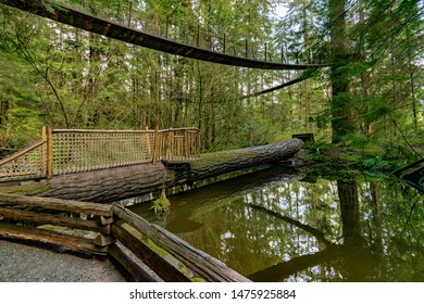 Fallen Tree became a bridge crossing the river. Suspension bridge over a river in rain forests of British Columbia, Vancouver, BS, Canada
