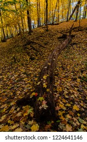 A fallen tree become a decaying log and nutures the soil in a maple forest at Hamme Woods Forest Preserve in Will County, Illinois