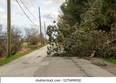 A Fallen Tree Blocking a Road after a Wind Storm