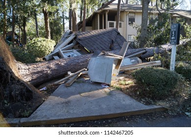 Fallen Tree blown down onto gazebo building causing damage from hurricane storm wind