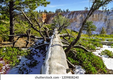 Fallen tree at Bryce Canyon National Park