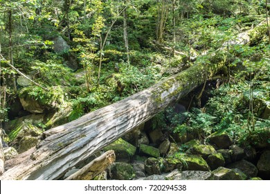 Fallen tree covered in moss in tropical forest. Wild greenery and big boulders under a fallen tree.