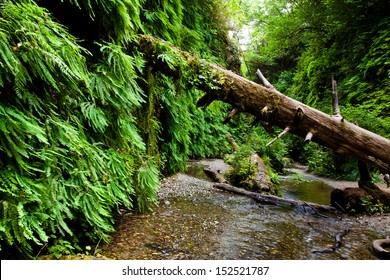 Fallen tree in Fern Canyon California