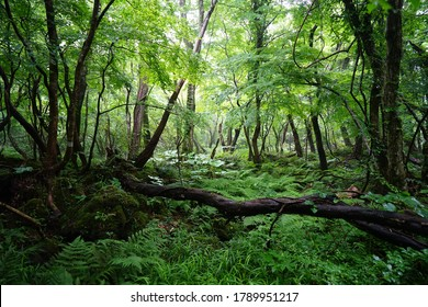 fallen tree and ferns in a dense forest