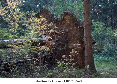 Fallen tree in the forest in autumn