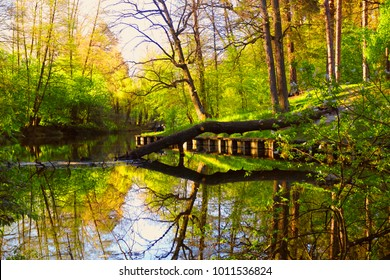 Fallen tree with forest reflection in water surface.  Colors frame: yellow, blue, green.