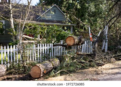 Fallen tree in the front yard of a residential home after storm. The tree has been cut into sections before removal.