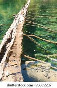 fallen tree in Hanging Lake