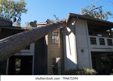Fallen Tree House Damage