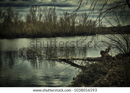 fallen tree in a lake with sad lighting