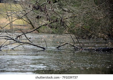 A fallen tree limb frozen in thin ice covering a pond along the shoreline.