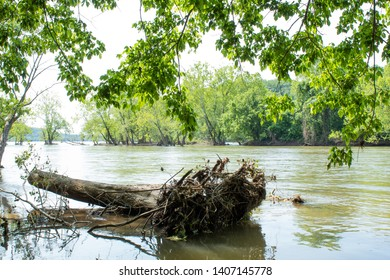 Fallen tree log in river