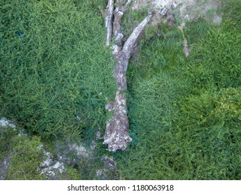 Fallen tree in the middle of green nature in Albania (Blue eye)