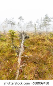 Fallen tree on a bog in fog