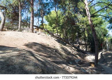 A fallen tree on the dry land near the Palace of Knossos.