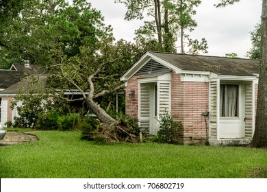 Fallen Tree on a home in Dickinson Texas after Hurricane Harvey
