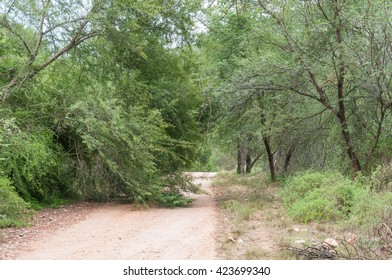 A fallen tree on the road through the Wilderness area in the Baviaanskloof (baboon valley)