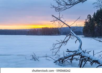 Fallen tree on the shore of a frozen lake. Winter landscape