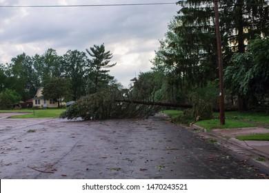 fallen tree on street. tree down on street. Many fallen trees on the street after a summer storm.