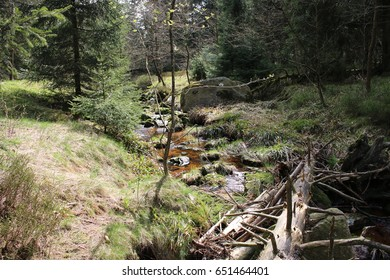 Fallen tree over a brook in the Harz Mountains.