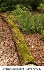 Fallen tree in a park. Summer season.