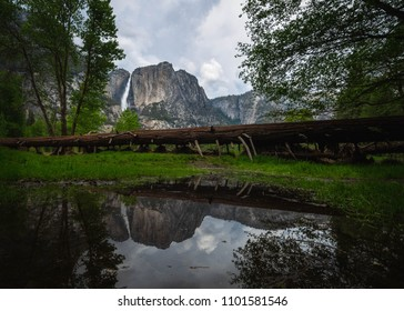 Fallen tree with pond reflection Yosemite National Park 2018.