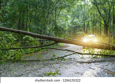 Fallen tree resting on road in mountain, block on road going to mountain, making traffic jammed