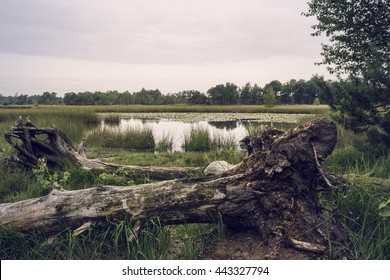 Fallen tree and sunset on lake swamp, Kampina, Netherlands