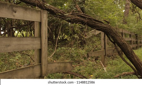 A fallen tree takes out a portion of a fence at Tom Sawyer State Park
