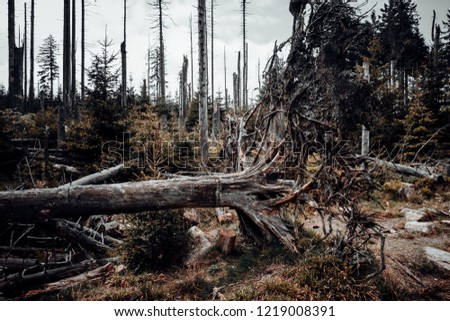 Fallen trees and deadwood in the upper Harz mountain forest