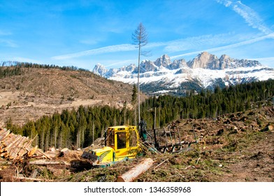 Fallen trees in Dolomites Alps after storm, Italy