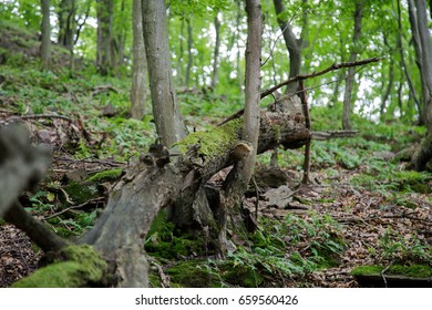 Fallen trees in the forest.