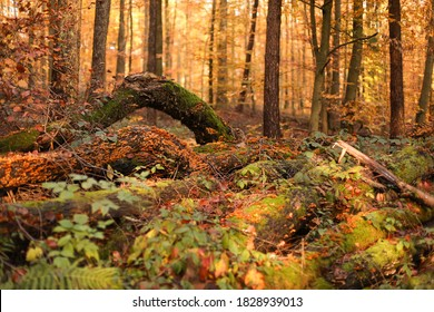 Fallen trees in the forest and overgrown with moss in autumn