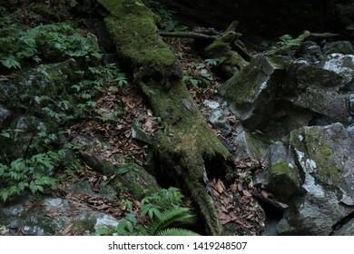 Fallen trees, fallen leaves and mossy rocks