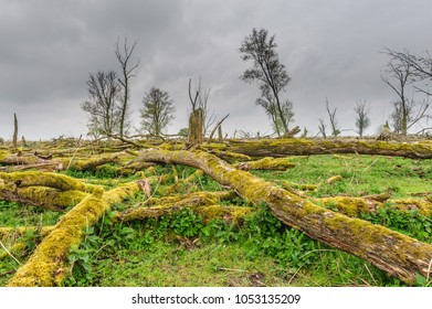Fallen trees, overgrown by Mosses, against an Overcast sky, in the Dutch Nature reserve Oostvaardersplassen.