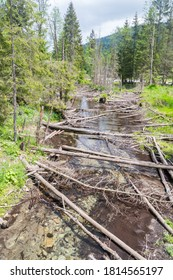 Fallen trees in Potok  Lisow stream in Tatra Mountains.
