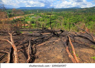 Fallen trees as a result of illegal logging and deforestation for agriculture in rainforest of Thailand
