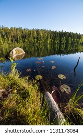 Fallen trees underwater at forest lake in Finland
