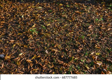 Fallen yellow leaves in forest