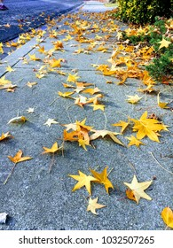 Fallen Yellow leaves on sidewalk