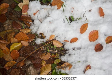 Fallen yellow leaves and white snow. Natural background