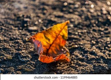fallin leaf in autumn